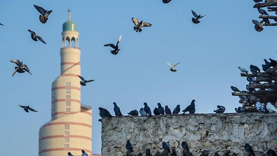 أماكن السياحة في دولة قطر